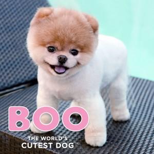 BOO - Tact 185x185