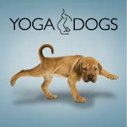 yogadogs_b