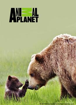 Animal Planet (アニマルプラネット)