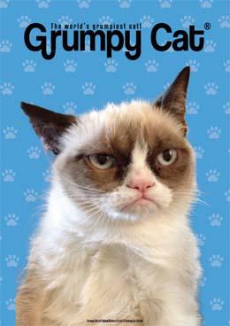 Grumpy Cat (世界一不機嫌な猫 グランピーキャット)
